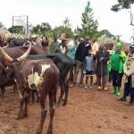 Tarehe 19-12-2015 Prof Tibaijuka akiwa katika mnada wa Mbunda wilayani Muleba
