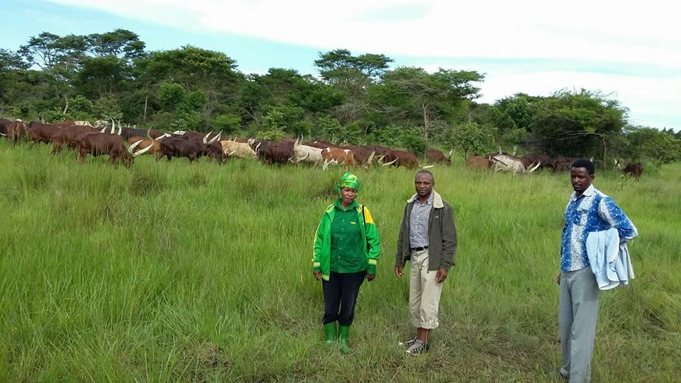 19-12-2015 Prof Tibaijuka akiwa katika shamba la kyamyolwa lililopo Muleba